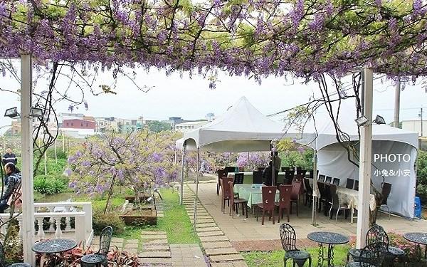 紫藤咖啡園 (屯山園區)