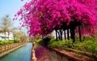 南圳綠堤堤岸公園