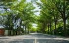 小葉欖仁綠色隧道