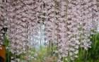 白河石斛蘭瀑布